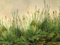 (Computer wallpaper 1436x1079) Durer 'Great Piece of Turf' 1503 by Plum leaves, via Flickr