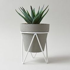Designed with a realistic finish, this indoor artificial plant is perfect for adding some greenery to a range of rooms. Featuring a detailed aloe vera plant set. Pink Wall Shelf, Adhesive Floor Tiles, Adhesive Backsplash, Adhesive Wallpaper, Artificial Flowers And Plants, Small Potted Plants, Black Vase, Concrete Pots, Cloth Flowers