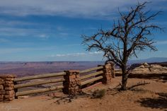 Canyonlands Dead Tree by Evgeny Gorodetsky on 500px