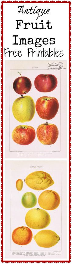 Antique Fruit Free Printables - Apples and Citrus Fruits via knickoftime.net