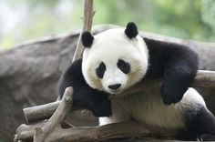 Zhen Zhen in the morning.... | I was the only one in the exh… | Flickr