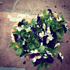 i heart pansies :)