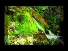 Bosques encantados del Valle de Mena