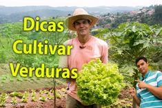 Dicas para cultivar verduras,  colha plantas e alegria, hortaliças e ali...