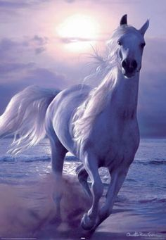 White horse galloping on a beach All The Pretty Horses, Beautiful Horses, Animals Beautiful, Beautiful Dream, Painted Horses, Horse Photos, Horse Pictures, Animals And Pets, Cute Animals