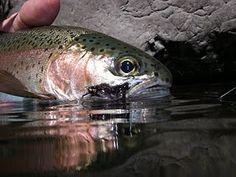 flyfishing chico, ca