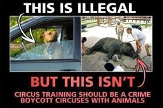 Boycott the circus!