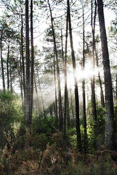 The light.  http://pratos-e-travessas.blogspot.com