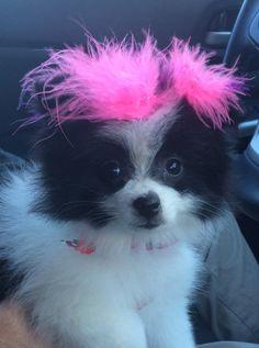 Spa day at Diva Dog