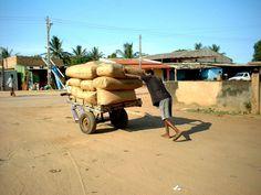 Pushing coffee around - Maxixe, Inhambane- Mozambique