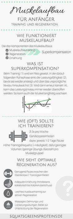 Training und Regeneration für Anfänger - Muskelaufbau für Anfänger Infografik - Muskelaufbautraining - Fitness Krafttraining Sport - Squats, Grens & Proteins