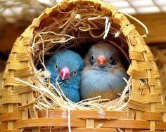 Questa immagine fa parte della raccolta «Uccelli» di animalcomix. Entra anche tu su Animal Comix! Goditi e condividi le immagini più tenere e divertenti sui nostri amici animali!