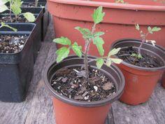 Vegetable Container Gardening Ideas - http://interiorwallpaper.xyz/0603/garden-design-ideas/vegetable-container-gardening-ideas/3044