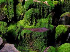 Moss Garden - Carnarvon Gorge, Queensland