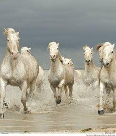 Horses+&+More+Horses