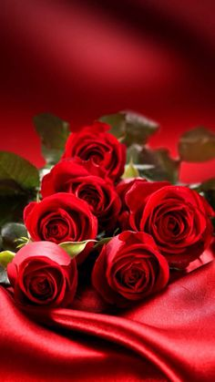 Red Roses ✿⊱╮