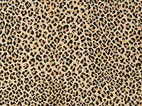 LEOPARD NO ROSE - NARROW COLLECTION - Stark Carpet Girl Cave