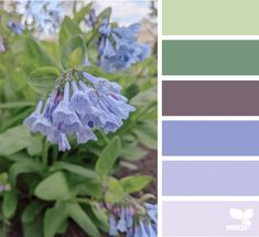 Hue Color, Color Combos, Colours That Go Together, Design Seeds, Spring Design, Blog Design, Summer Colors, Color Inspiration, New Homes