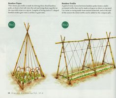 Bamboo tepee and trellis for peas, originally published in Organic Gardening magazine, Volume 57, Number 2 and discovered while browsing  the mixedgreensblog.