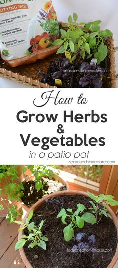 If you are short on gardening space then a container garden is your best bet. Try planting a herb garden in a container and see how easy it is. Succulent Garden Diy Indoor, Indoor Vegetable Gardening, Home Vegetable Garden, Container Gardening, Organic Gardening, Herbs Garden, Moss Garden, Veggie Gardens, Container Plants