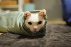 Cute cat photo | Cute Animals Photos