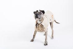 2. Hund: Bekleidung - Nach Maß:Hunde Trenchmantel Regenjacke Wasserdicht - ein Designerstück von happystaffyme bei DaWanda