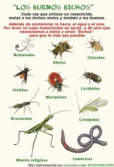 Bad Bugs in Your Garden - Garden Style - Good vs. Bad Bugs in Your Garden The good and bad bugs that may inhabit our garden and their effect on Garden Bugs, Garden Insects, Garden Pests, Garden Animals, Organic Gardening, Gardening Tips, Organic Plants, Kitchen Gardening, Grow Organic