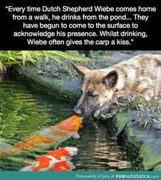 Dog and fish friends