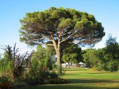 Que planter sous un conifère ? Landscape Art, Landscape Architecture, Cyclamen De Naples, Geranium Vivace, Rhododendron, Garden Design, Golf Courses, Planters, Plus Belle