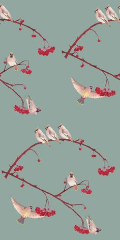 Beautiful illustrative bird wallpaper design of perched waxwings feasting on plump rowan berries in gorgeous rich colours. Bird Wallpaper Bedroom, Hall Wallpaper, Kitchen Wallpaper, Wallpaper Online, Wallpaper Designs For Walls, Bird Theme, Bird Silhouette, Blue China, China China
