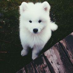 Cão branco lindo