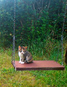 sweet little kitty on swing