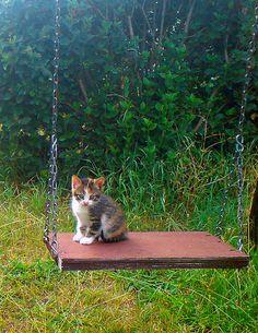 Tiny kitten.