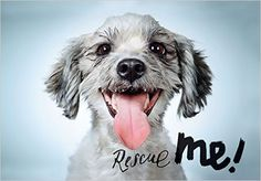 Amazon.com: Rescue Me: Dog Adoption Portraits and Stories from New York City (9781597113380): Richard Phibbs: Books