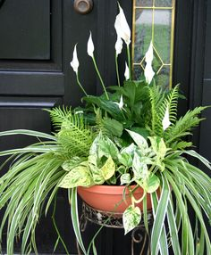Beautiful container garden filled with the most popular indoor air purifiers | Peace Lily, Ferns, Spider Plant & Pothos