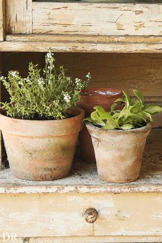 potted herbs...chippy white paint