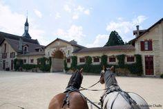 Arrivée au trot dans le Haras National de Montier-en-Der, l'écrin des chevaux ardennais. Le plaisir d'être porté par ces animaux majestueux est unique.