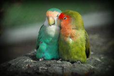 Hermosas y Adorables Aves Enamoradas