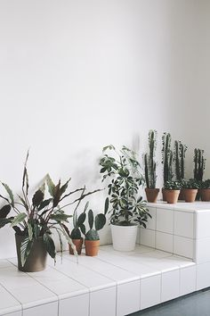 white tile plant shelf