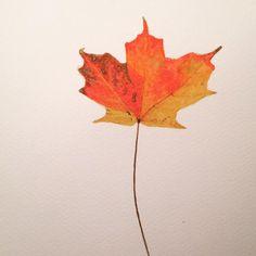 24 #flowleaf2015 #onedrawingaday #fall #autumncolors #autumne #leaf