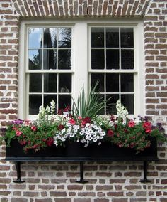 Wonderful Window Boxes charleston does window boxes great!charleston does window boxes great! Ventana Windows, Ivy Geraniums, Window Box Flowers, Garden Windows, Porch Windows, Front Windows, Window Planter Boxes, Front Yard Landscaping, Landscaping Ideas