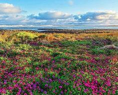 Spring blooms, Port Fairy, Great Ocean Road, Victoria, Australia. Photo: portfairypics