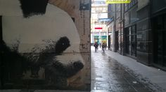 Glasgow wall art, panda