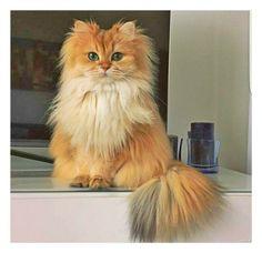 cute cat http://ift.tt/2otuyvo