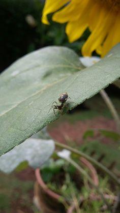 Spider alias monggo