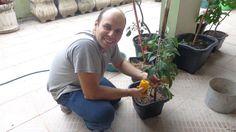 Como plantar pimentões de todas as cores, processo completo!