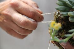 DIY Garden: Kokedama Hanging Plant, Step 4a