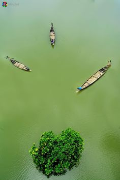 Ratar Gul (Swamp Forest), Sylhet, Bangladesh
