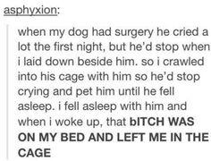 Hahaha funny pets ♡