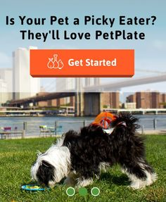 Try one of our new customized delivery plans today! www.petplate.co . #dogs #dogsofinstagram #eat #dogfood #delivery #barkbox #tibetanterrier #terrier #dog #puppy #baby #cute #weeklyfluff #love #eeeeeats #yummy #food #nyc #newyork #brooklyn #williamsburg #queens #tryit #new #fun #subscriptionbox by petplate
